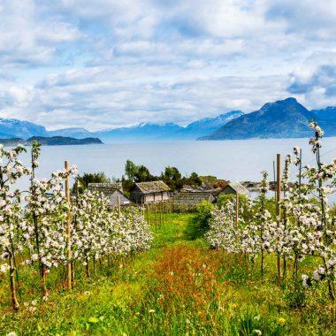 Au pays des fjords